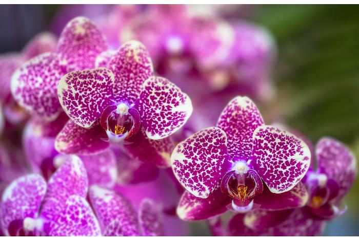 Модульная картина Лиловая Орхидея